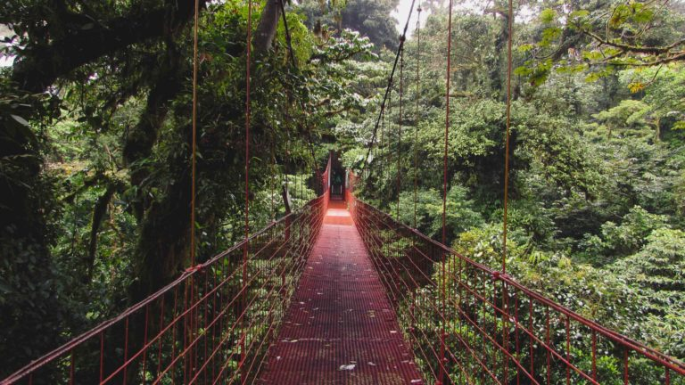Puente colgante Reserva Bosque Nuboso
