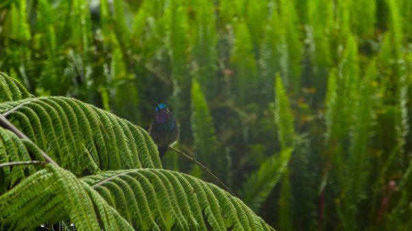Alojamientos en Costa Rica